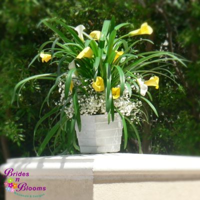 Ceremony Decor - potted lily plant with mini callas & babies breath