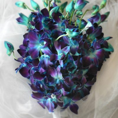 Brides N Blooms, Wholesale & Designs - Blue Orchid Boutoniere