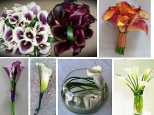 Mini Calla Wedding Package