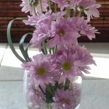 Birthday Pink Daisies